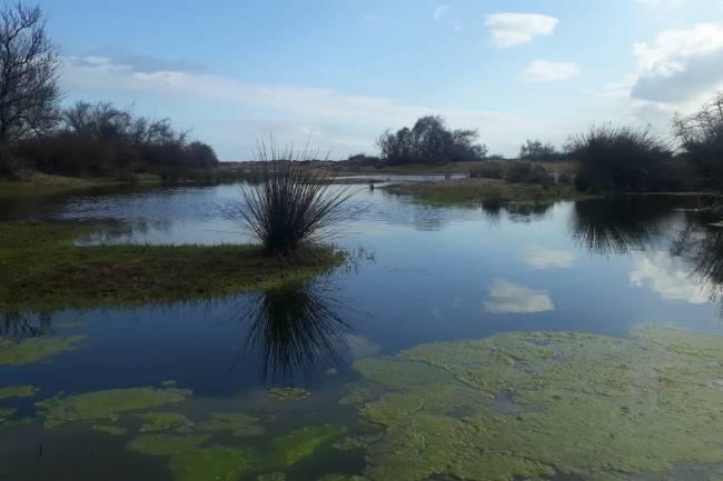 Suyun Hükmettiği Toprak; Karacabey Longoz
