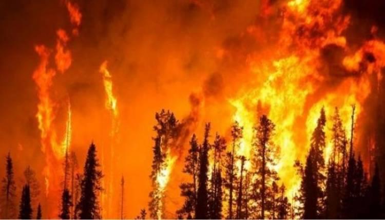 Avustralya'daki Yangın İçin Yardım